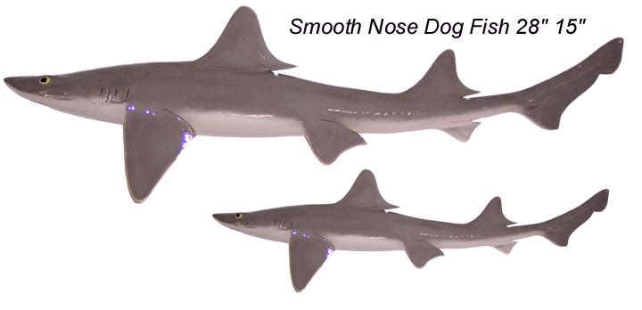 yellowfin tuna charters dog fish 720x348